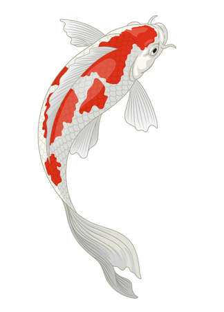 koi fish japan in red and white kohaku pattern Иллюстрация