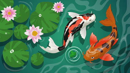 vector of koi fishes swiming in the pond 向量圖像