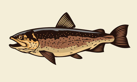 vector of cutthroat trout fish 向量圖像