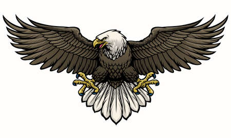vector of hand drawn bald eagle spreading the wings Vetores