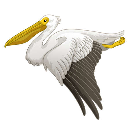 Flying Great white pelican in hand drawn style