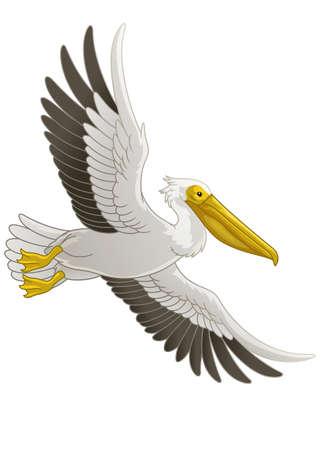 Great White Pelican Bird Flying Vettoriali