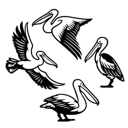 set of pelican bird