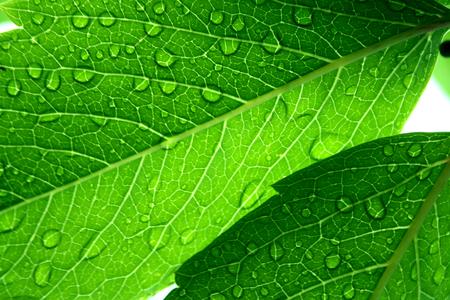 Macro shot of a fresh green leaves after rain Archivio Fotografico