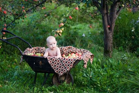 Portrait of  the 5 months baby girl sitting in a handcart under an apple-tree.