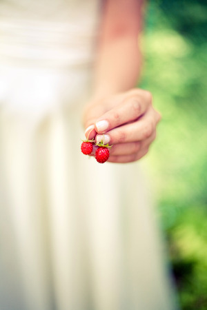 Girl holding forest strawberries. photo