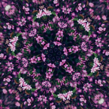 Abstract floral background, pink flowers with kaleidoscope effect