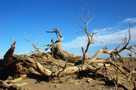 Landscape of dead tree trunks in the desert Stock Photo - 8518821