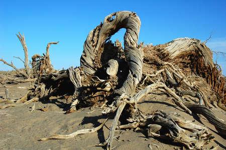 Landscape of dead tree trunks in the desert Stock Photo - 8518826