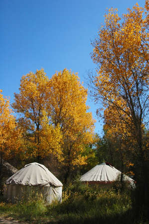 Landscape of whites tents in the golden autumn woods Stock Photo - 8547465