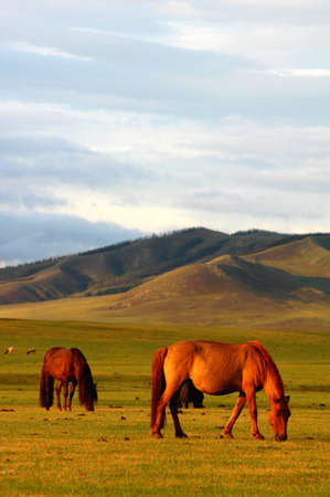 Landscape of horses on the grasslands of Mongolia Stock Photo - 8547419