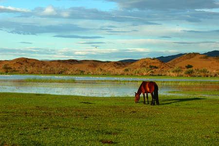 nomadism: Landscape of horses on the grasslands of Mongolia Stock Photo