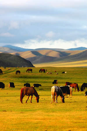 Landscape of horses on the grasslands of Mongolia Stock Photo - 8547425