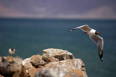 Still view of a flying seagull passing by the island photo