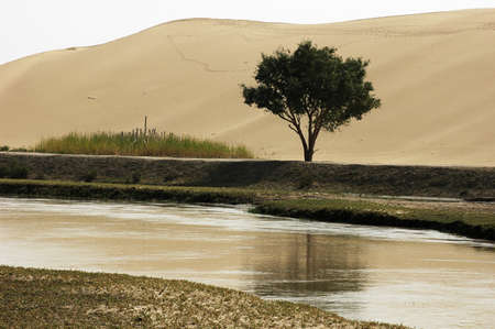 sandhills: Landscape of river and sandhills with a single tree
