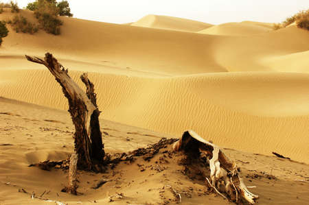 Landscape of dead trees and sandhills of deserts photo