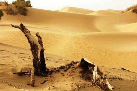 arboles secos: Paisaje de �rboles muertos y dunas de los desiertos Foto de archivo