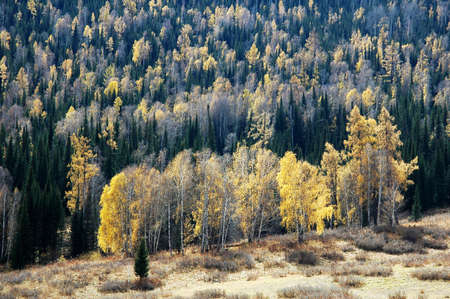 Landscape of green and yellow forest in autumn Stock Photo - 8576501