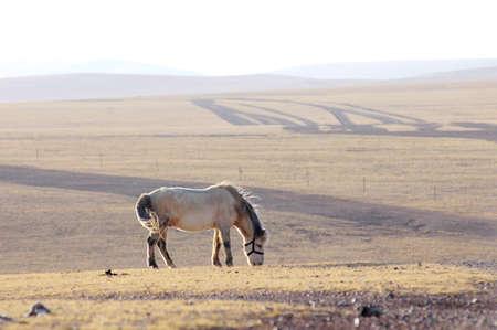 Landscape of Horse on meadow in Tibet photo