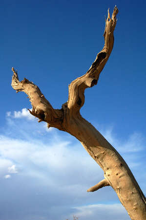 View of dead tree in the desert Stock Photo - 8874065