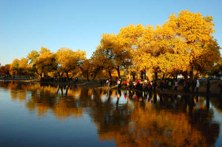 Scenery of golden trees in the autumn Stock Photo - 8874070