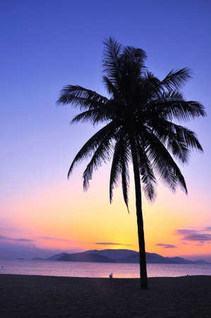 Landscape of a coconut tree against sky at sunrise photo