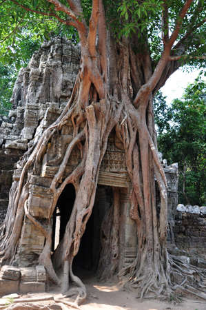 Landscape of the historic ruins with huge tree roots at Angkor, Cambodia photo