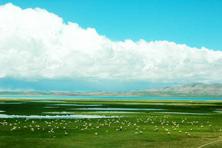 Landscape of green meadows with sheep and lakes Stock Photo - 9943744
