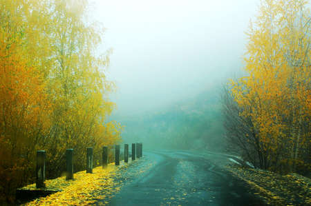 fascinating: Fascinating scenery of golden trees in a foggy autumn morning