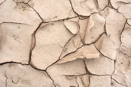 dryness: Closeup of dried and cracked earth