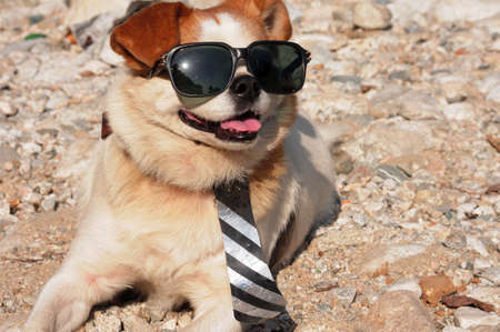 Funny puppy in sunglasses wearing a necktie photo