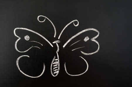 Butterfly drawn with chalk on a blackboard photo