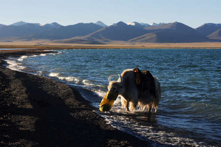 Landscape of mountains and lakes in the highlands of Tibet,with the silhouette of a yak