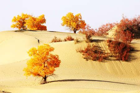 xinjiang: Paysage de désert