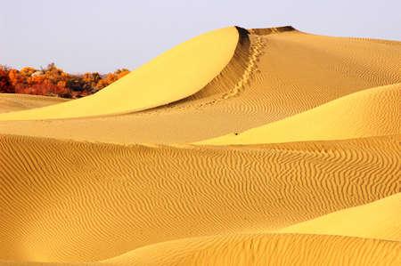 xinjiang: Paysage de désert d'or dans le Xinjiang en Chine Banque d'images
