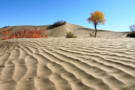 Landscape of desert Stock Photo - 13850551