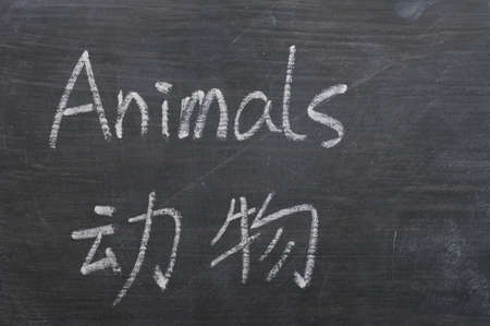 Animals - word written on a smudged blackboard with a Chinese translation photo