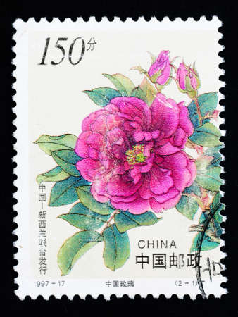 CHINA - CIRCA 1997: A Stamp printed in China shows Chinese rose flowers, circa 1997 photo