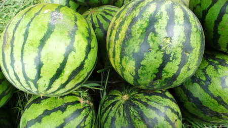 pulpy: A group of fresh green watermelon fruits