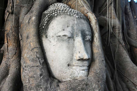 Head of Sandstone Buddha surrounded in The Tree Roots at Wat Mahathat, Ayutthaya, Thailand Stock Photo - 20305988