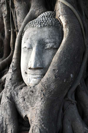 Head of Sandstone Buddha surrounded in The Tree Roots at Wat Mahathat, Ayutthaya, Thailand  photo