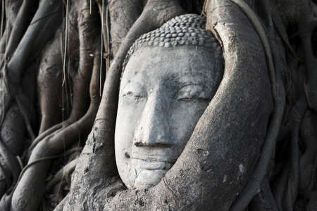 Head of Sandstone Buddha surrounded in The Tree Roots at Wat Mahathat, Ayutthaya, Thailand Stock Photo - 20305980