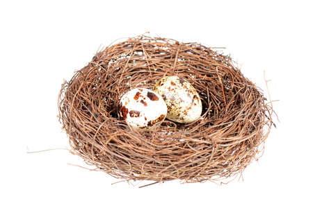 Birds nest and quail eggs isolated on a white background photo