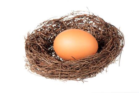 Birds nest with an egg isolated on a white background photo