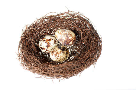 Birds nest with three quail eggs inside isolated on a white background photo