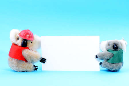 Two toy koala holding a blank white card on a blue background photo