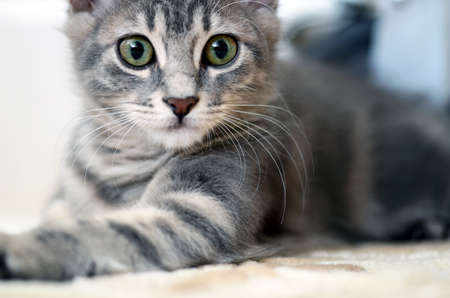 cute kitten Stock Photo