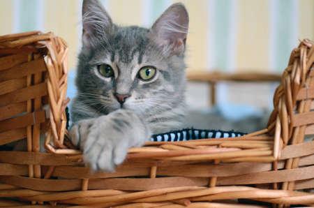 cute cat in basket photo
