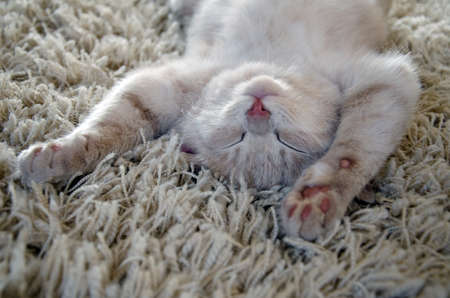 cute cat  kitten sleeping on carpet photo