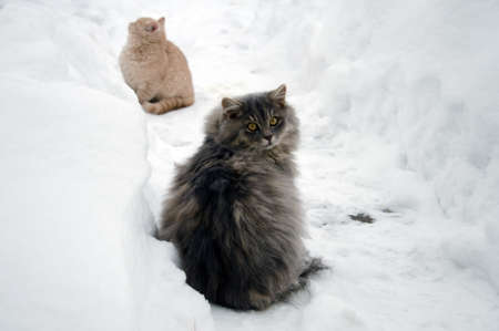 cat and kitten on snow in winter photo